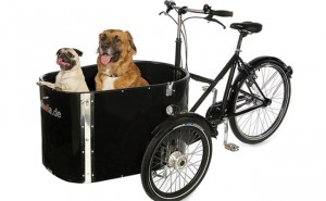 Nihola_Dog_Cargo_Front_Quarter_2_Dogs
